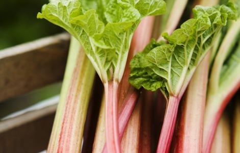 miriam+preis-early+rhubarb-752